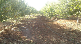 Land for Sale Aaqoura ( Laqlouq ) Jbeil Area 1825Sqm