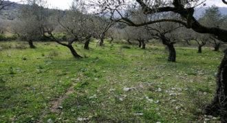 Land for Sale Bejjeh Jbeil Area 680Sqm