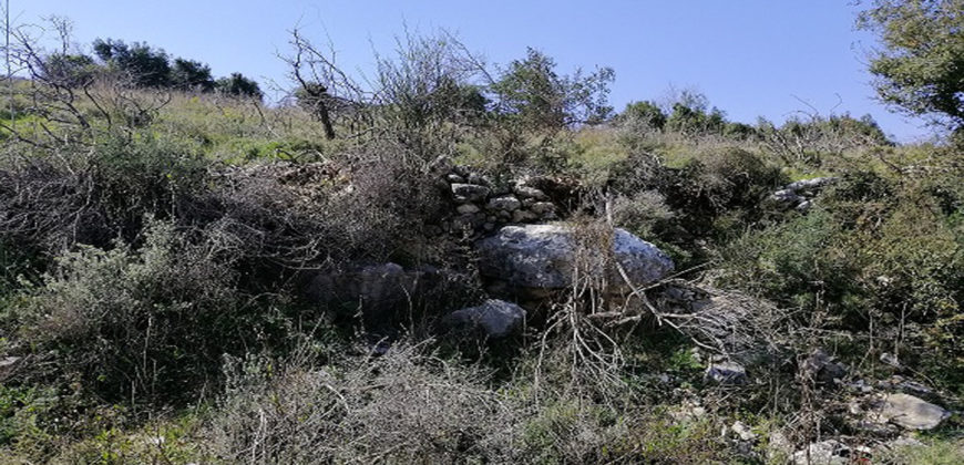 Land for Sale Kharbeh Jbeil area 8057Sqm