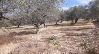 Land for Sale Ain Kfaa Jbeil Area 1331Sqm