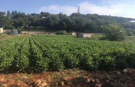 Land for Sale Maad Jbeil Area 3282Sqm
