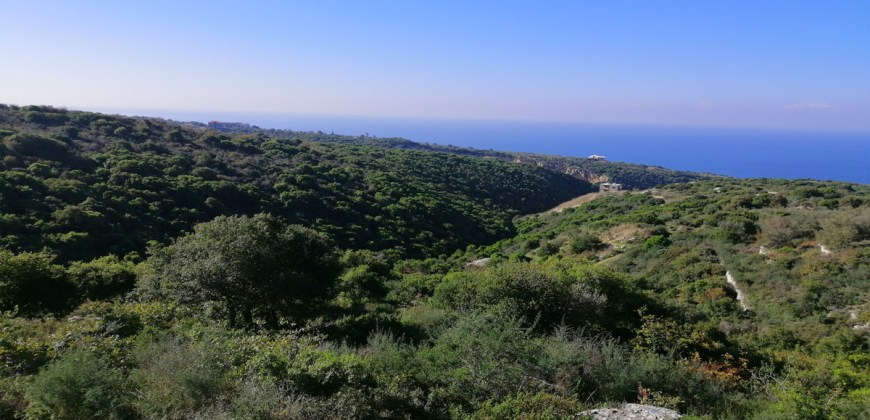 Land for Sale Berbara Jbeil Area 1378Sqm