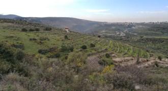 Land for Sale Bziza Koura Area 11000Sqm