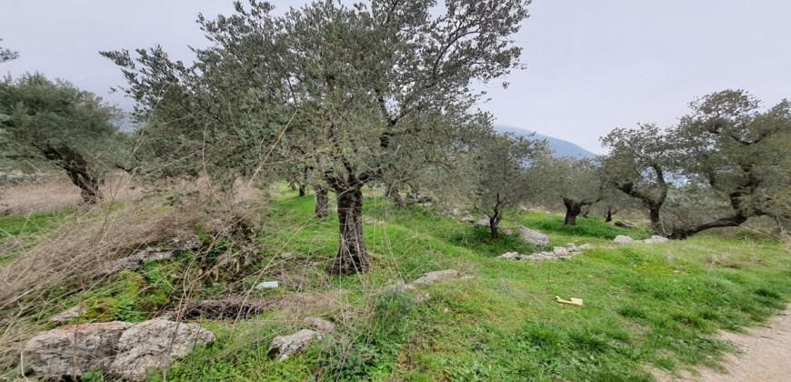 Land for Sale Douma Batroun Area 5294Sqm