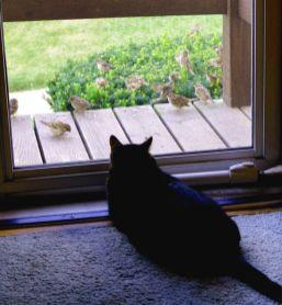 Jack & the Birds