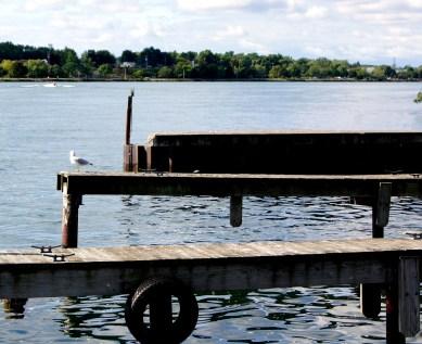 Seagull on dock