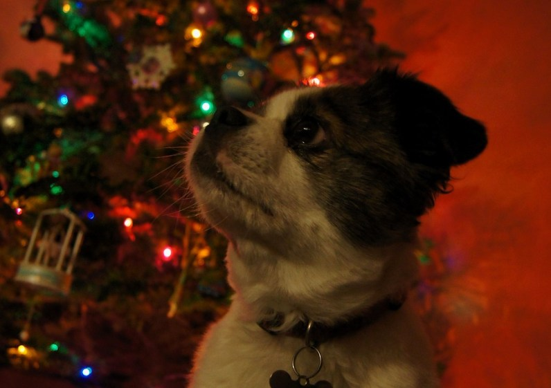 Francie with tree