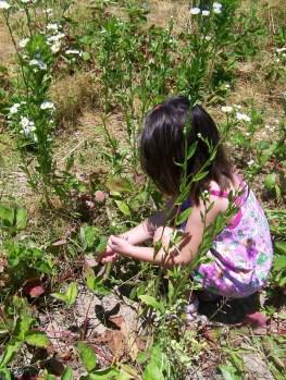Matilda picking