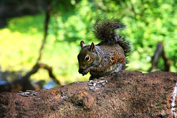 City_squirrel