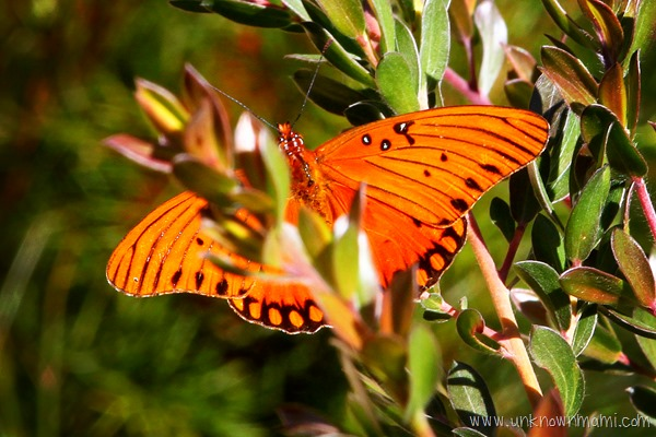 butterfly on a plant