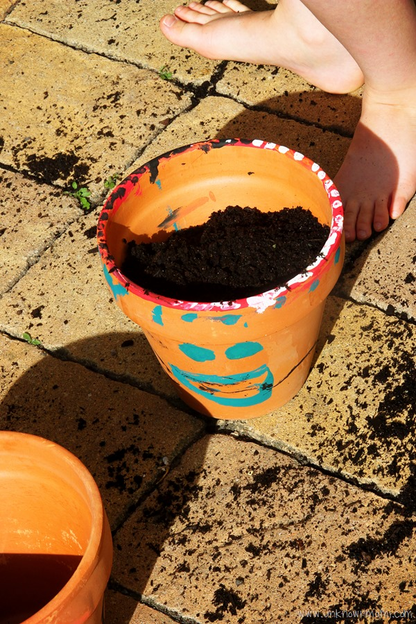 plant pot with soil