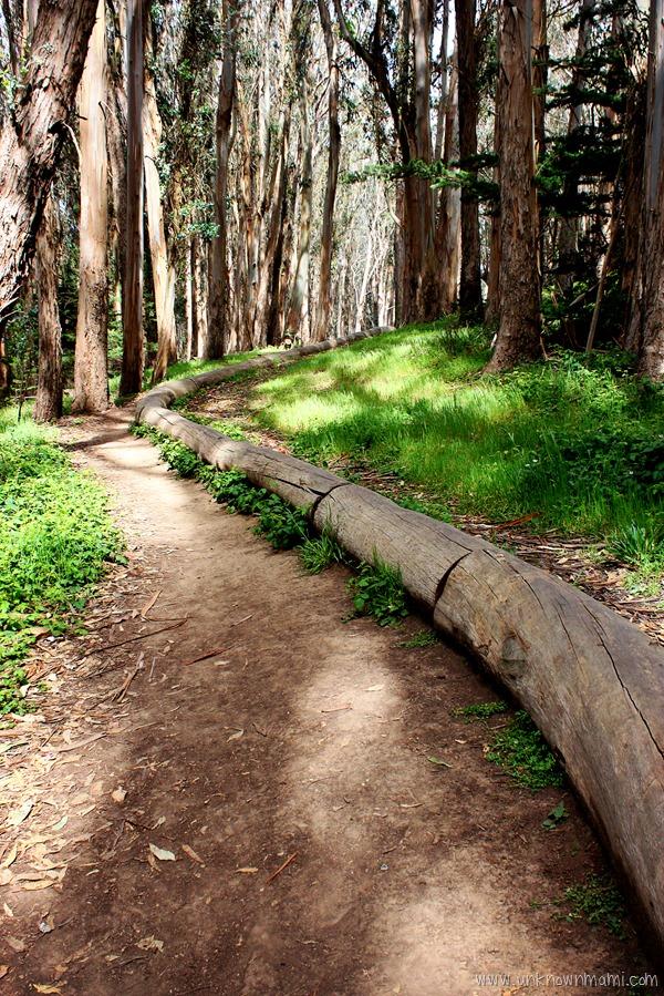 Andy Goldsworthy Wood Line installation