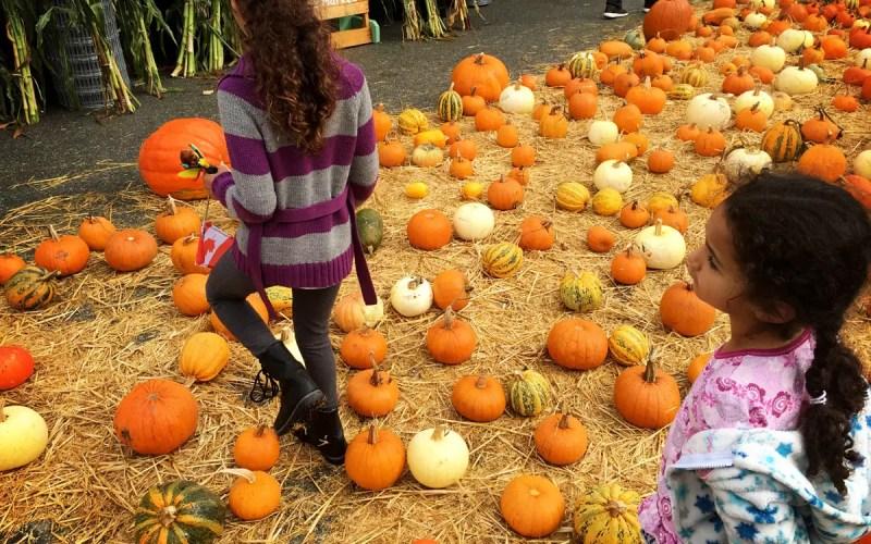 Half Moon Bay Pumpkin Festival (Sundays In My City)