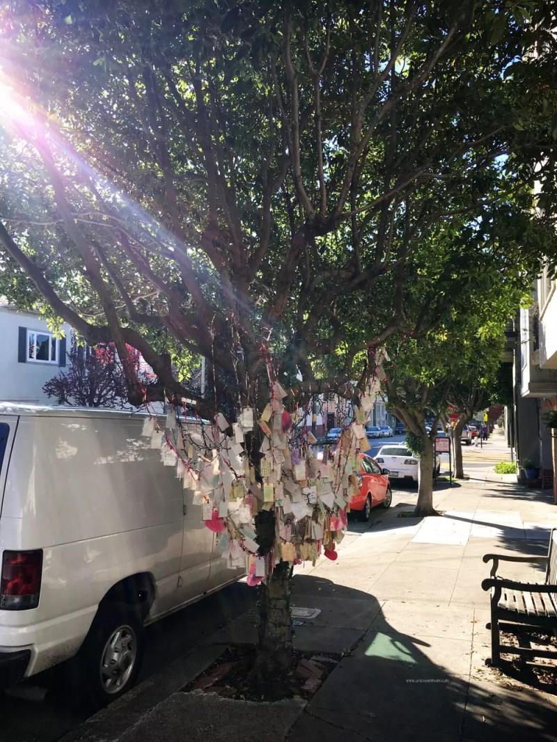SF Wishing Tree