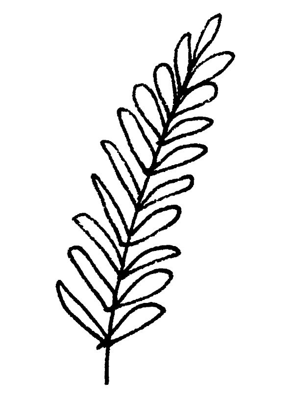 Line Drawing Leaf : Ways to draw fall leaves dawn nicole designs