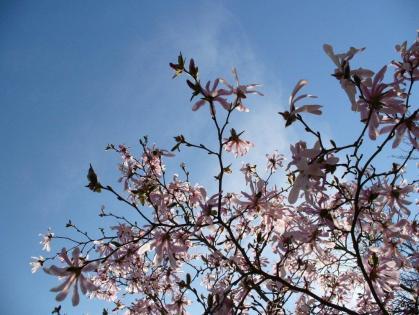 soleil printemps