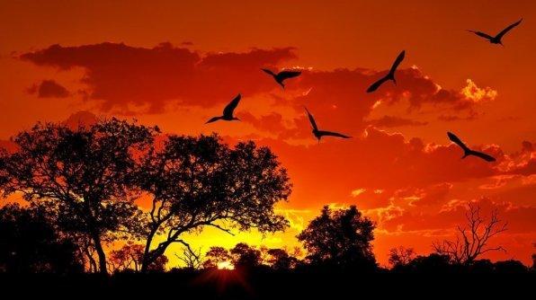 Birds Flying during Sunset, Red Sky