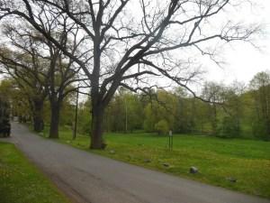 2.V Lučinách se zachovala alej starých dubů vysázených továrníkem Hansem Kropfem, které patří mezi významné pražské stromy. Nedaleko odtud nechal také postavit i zmíněnou vilu Lalottu.