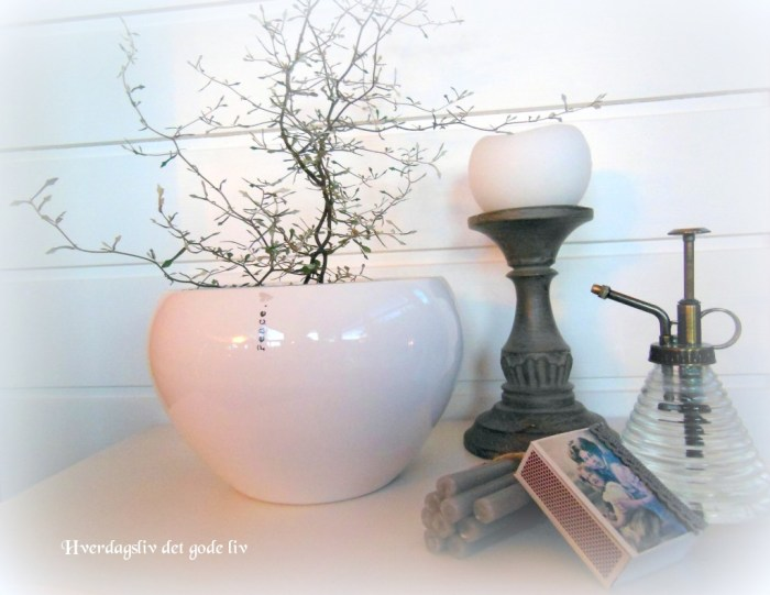 Stell av Corokia - White - Nordic interior