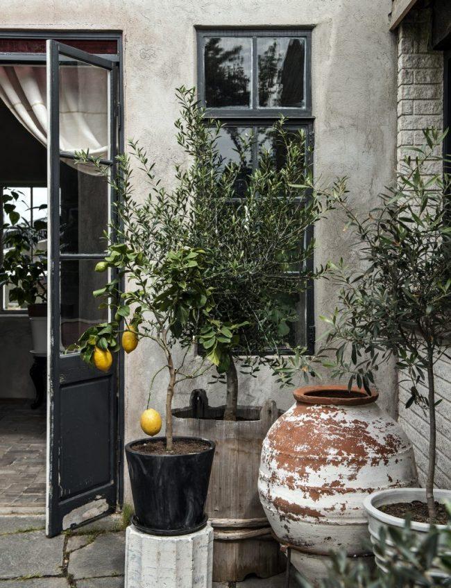 Orangerie eller drivhus – hva er din drøm
