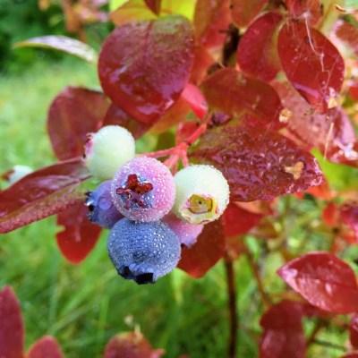 September – i en hage full av farger