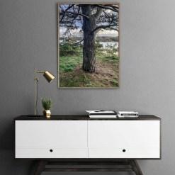 Oak view photo art