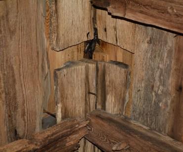 Romansk nock i ek i Edåsa kyrka med tillhörande fladdermöss.