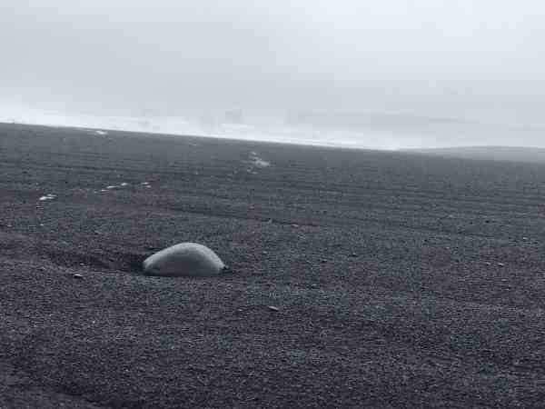 Rock in the Iceland black sand