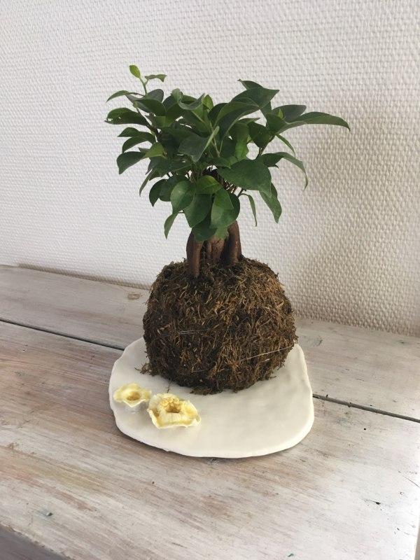 plateau en porcelaine pour bonzai
