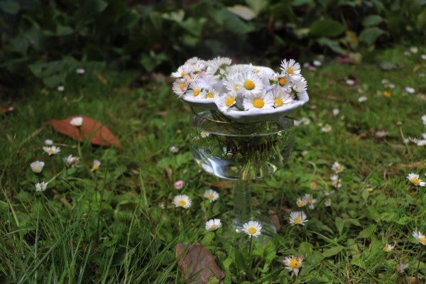 pique fleurs blanc marguerites sur verre à pied transparent