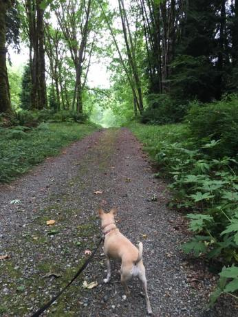 Photo by Shannon Marie Chavez at Coal Creek Trail. Della leading the way.
