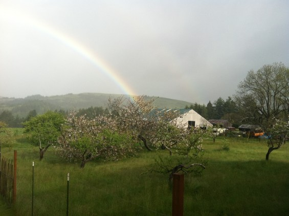 An auspicious rainbow! This is from my porch looking towards the barn that houses By Nieves HQ the day we were moving into the brand new space.