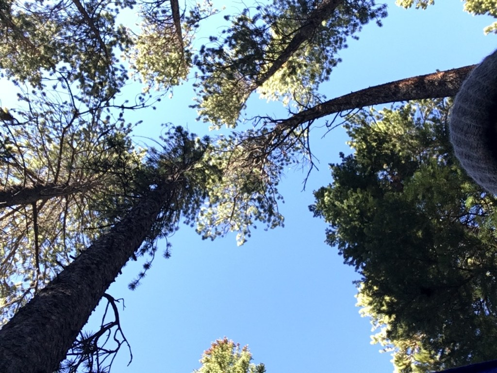 The view from my hammock