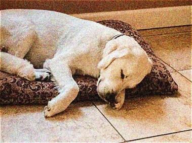 buddy-sleeping