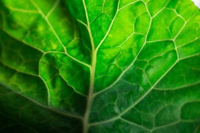 Collard Greens Veins
