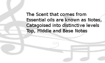 Background musical notes discussing notes of Essential Oils