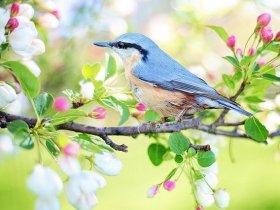 Makna Mimpi Menembak Burung Menurut Primbon dan Islam