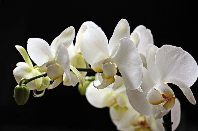 Arti Mimpi Memetik Bunga Anggrek Menurut Primbon