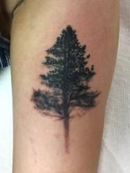 black-tree2