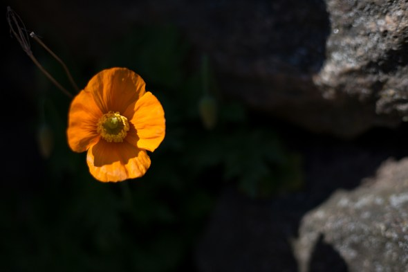 bright orange flower on dark background