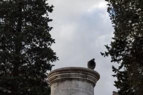 Silhouette af en due på en søjle