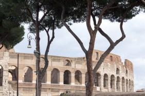 Toppen af Colosseum set gemme nogle fine krogede træstammer