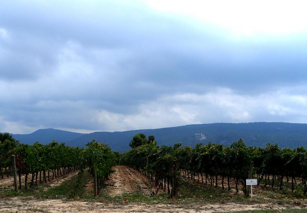 Raventos i Blanc and Codorniu Vineyards in Spain