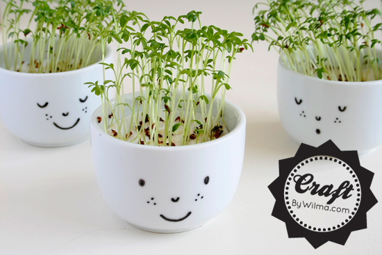 cute cress cups with a face diy