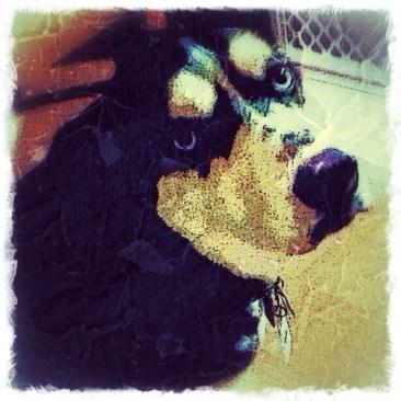 Custom Digital Pet Portrait of a Dog By BZTAT