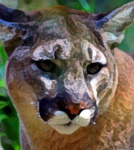 canton-mountain-lion-art-bztat