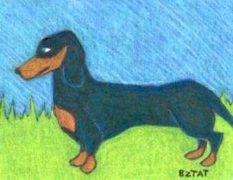 Dachshund Drawing by BZTAT