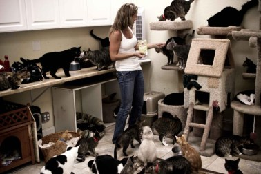 Crazy Cat Lady Dorian of Your Daily Cute