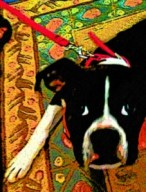 Boxer dog custom digital portrait by BZTAT