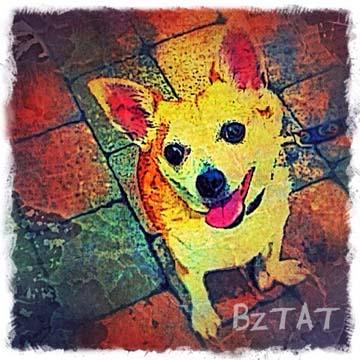 Custom Digital Pet Portrait by BZTAT